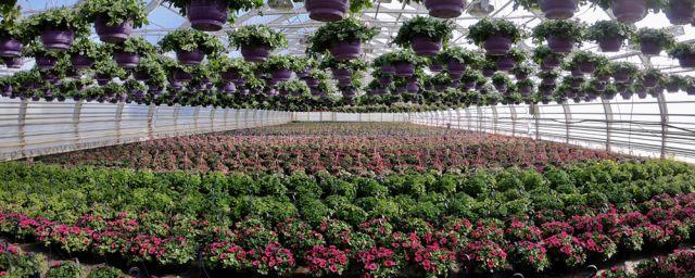 Lepolan puutarha ilmasta